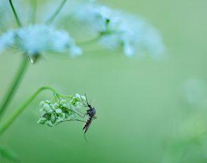 """""""Zanzare, alcune piante le tengono lontane"""", vero o falso?"""
