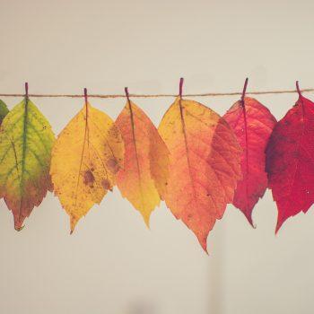 autunno allergie