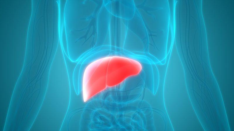 fegato grasso farmaco